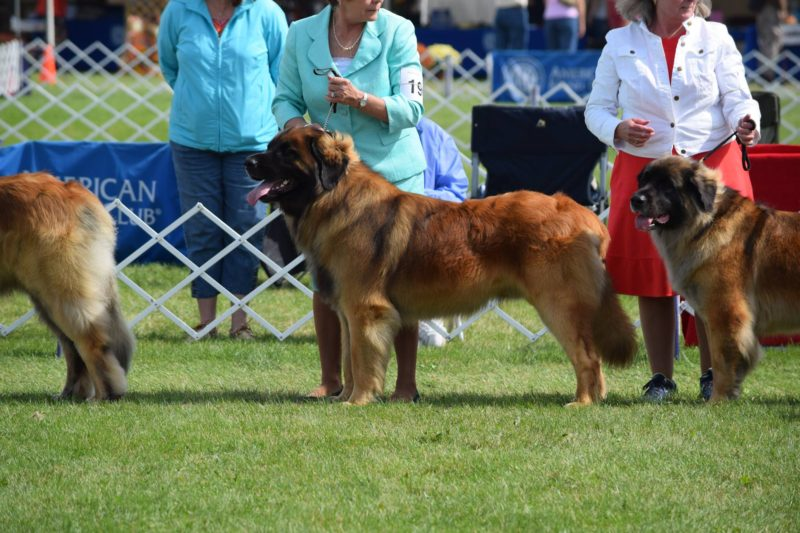 Wyatt 2016 Best of Breed 2