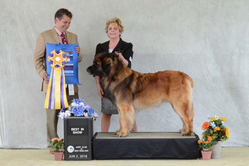 Wyatt UKC Best in Show 2018