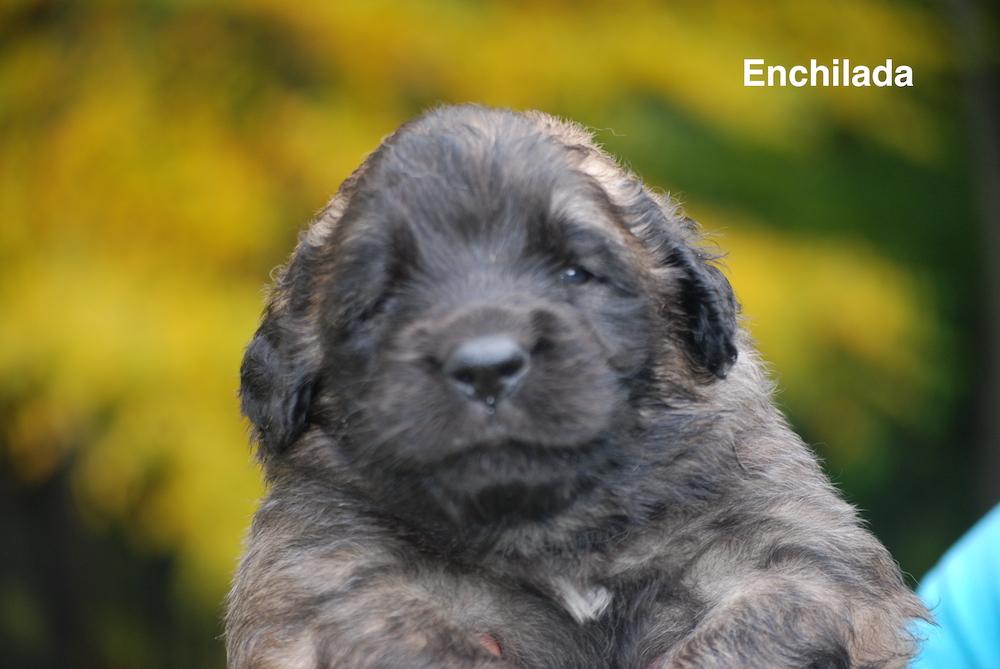 Enchilada for website
