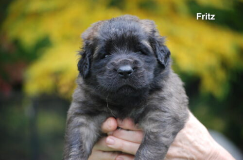 Fritz for website