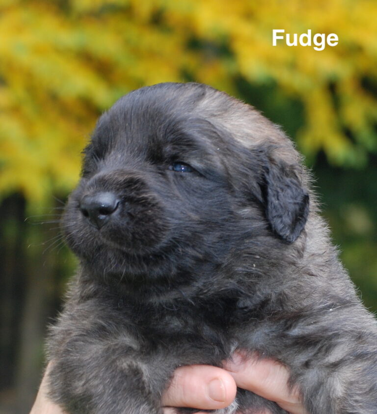 Fudge for website