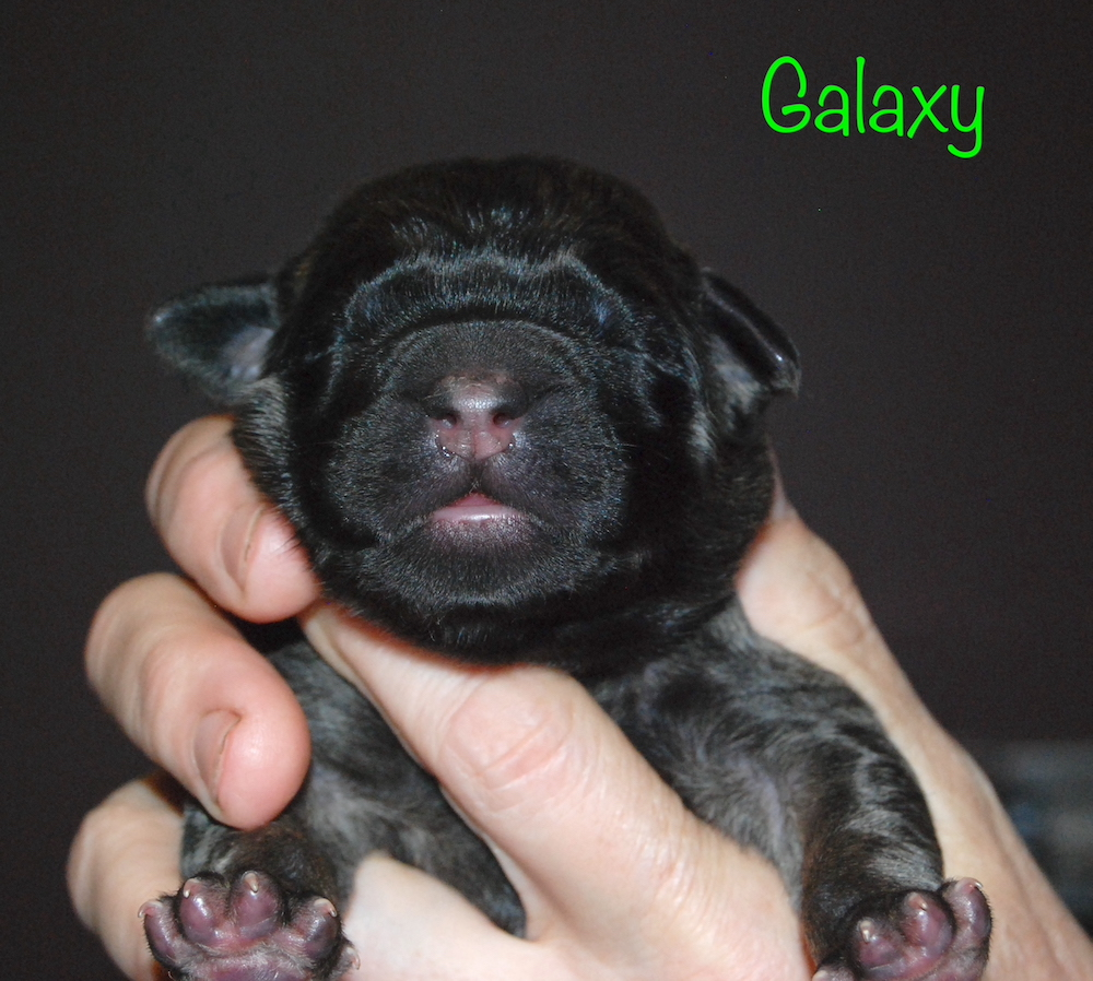 Galaxy for website