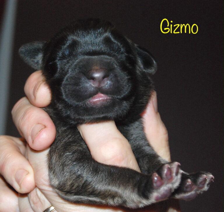 Gizmo for website