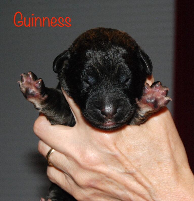 Guinness for website