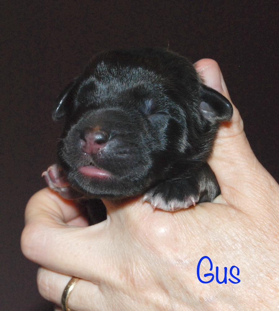 Gus for website