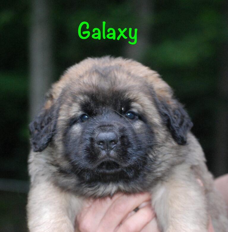 Galaxy - 5 weeks for website