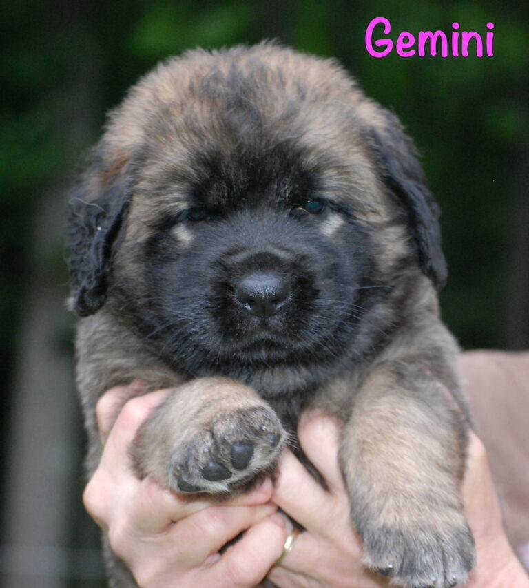 Gemini - 5 weeks for website