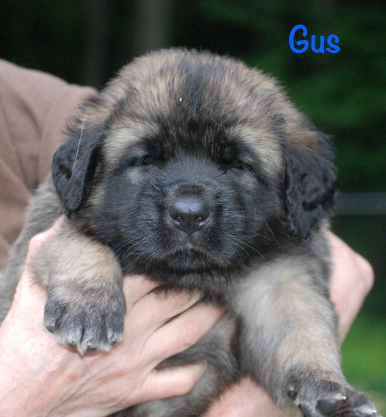 Gus - 5 weeks for website